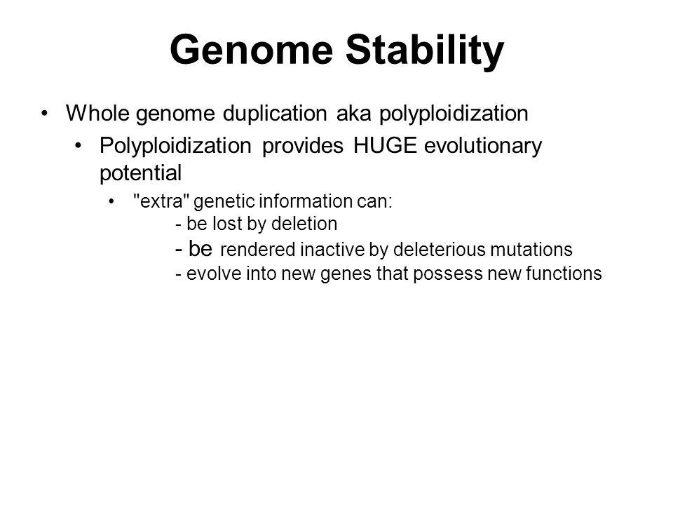 Genome Stability Whole genome duplication aka polyploidization