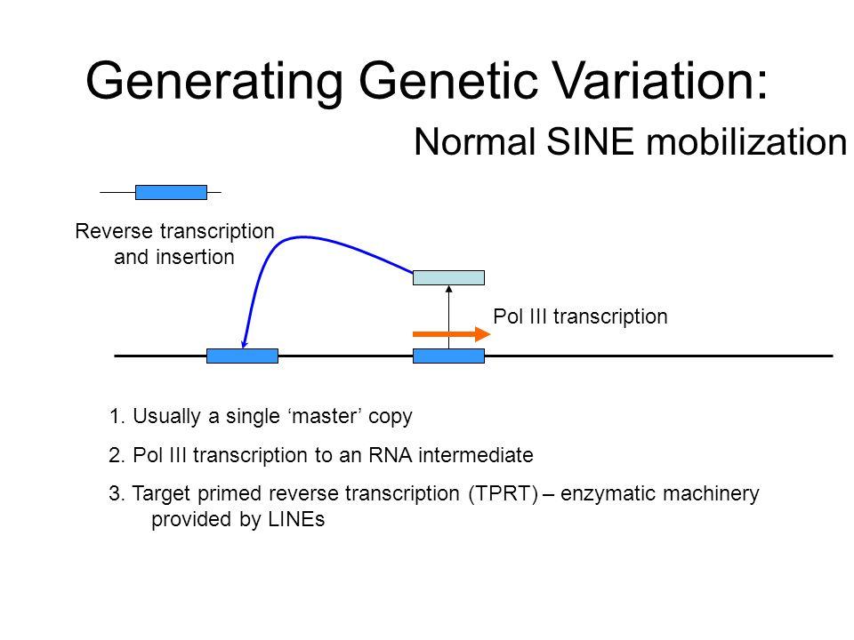 Generating Genetic Variation: