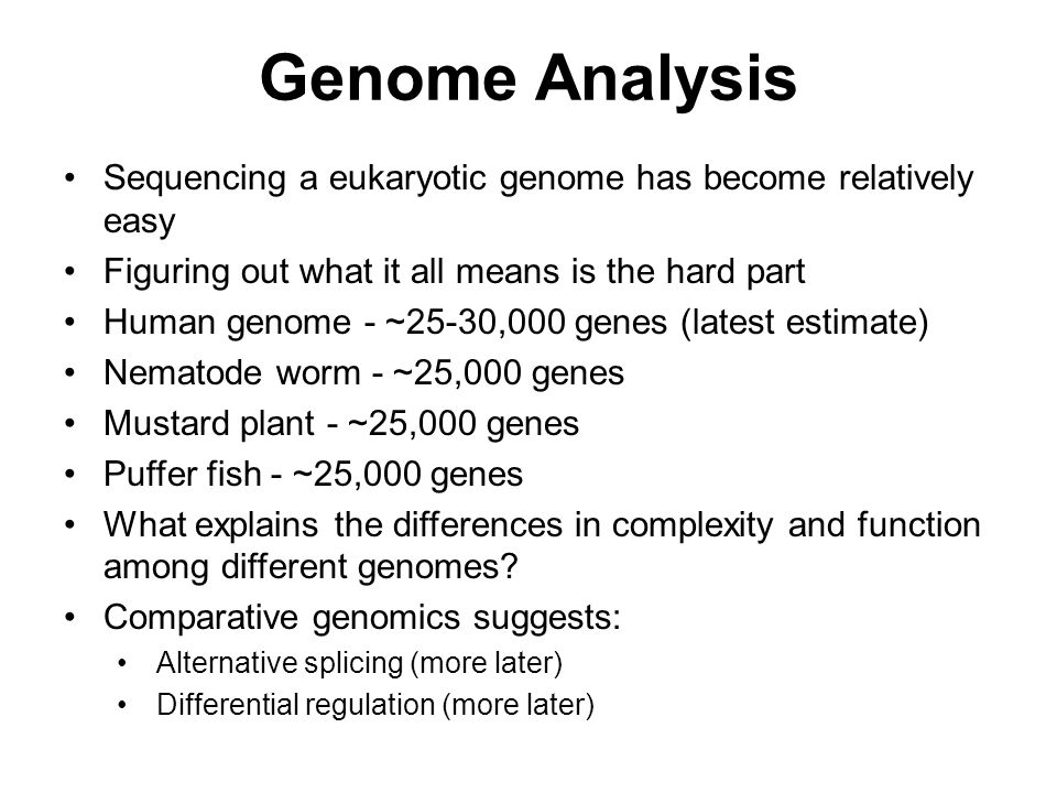 Genome Analysis Sequencing a eukaryotic genome has become relatively easy. Figuring out what it all means is the hard part.