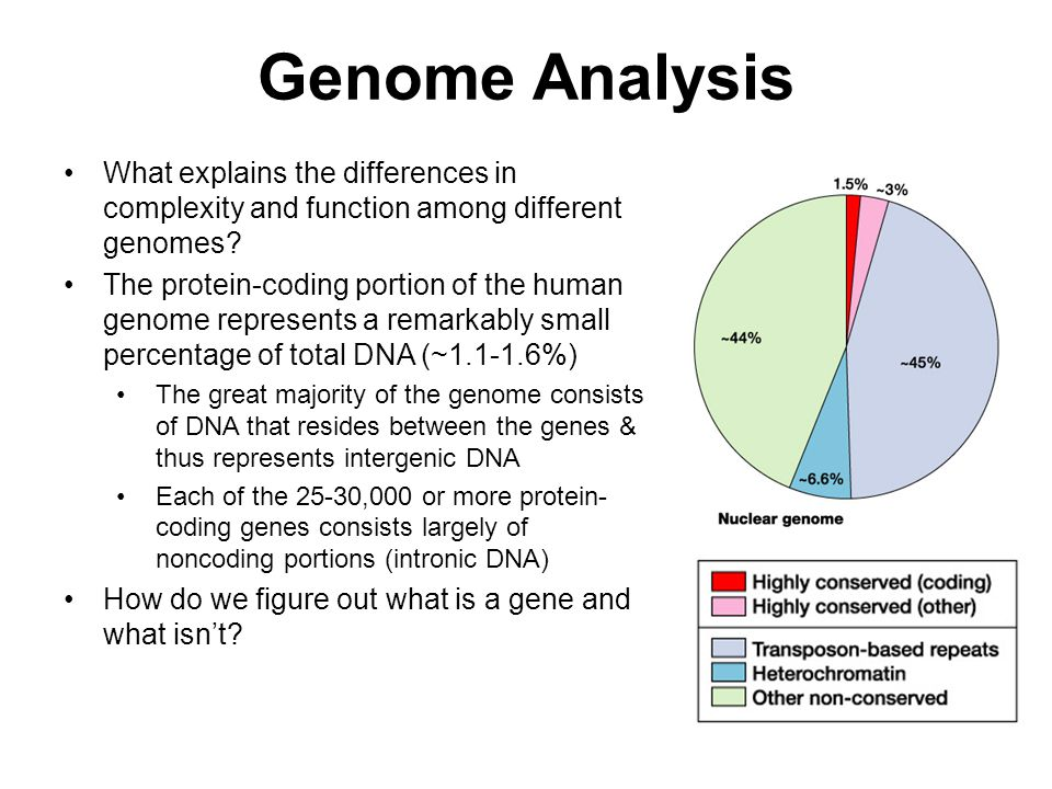 Genome Analysis What explains the differences in complexity and function among different genomes