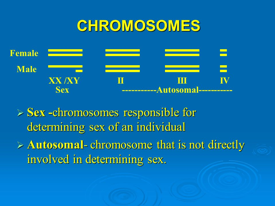 CHROMOSOMES Female. Male. XX /XY. II III IV. Sex. -----------Autosomal-----------