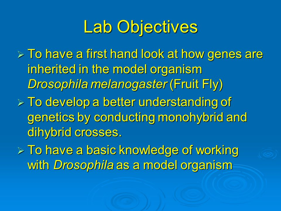 Lab Objectives To have a first hand look at how genes are inherited in the model organism Drosophila melanogaster (Fruit Fly)