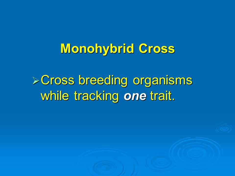 Monohybrid Cross Cross breeding organisms while tracking one trait.