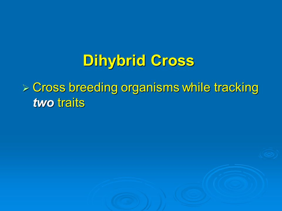 Dihybrid Cross Cross breeding organisms while tracking two traits