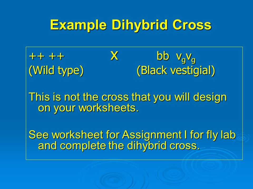 Example Dihybrid Cross