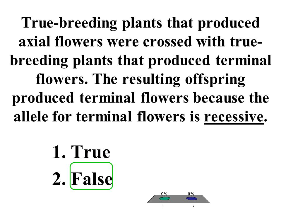 True-breeding plants that produced axial flowers were crossed with true-breeding plants that produced terminal flowers. The resulting offspring produced terminal flowers because the allele for terminal flowers is recessive.