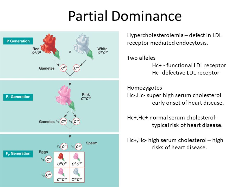 Partial Dominance Hypercholesterolemia – defect in LDL receptor mediated endocytosis. Two alleles.
