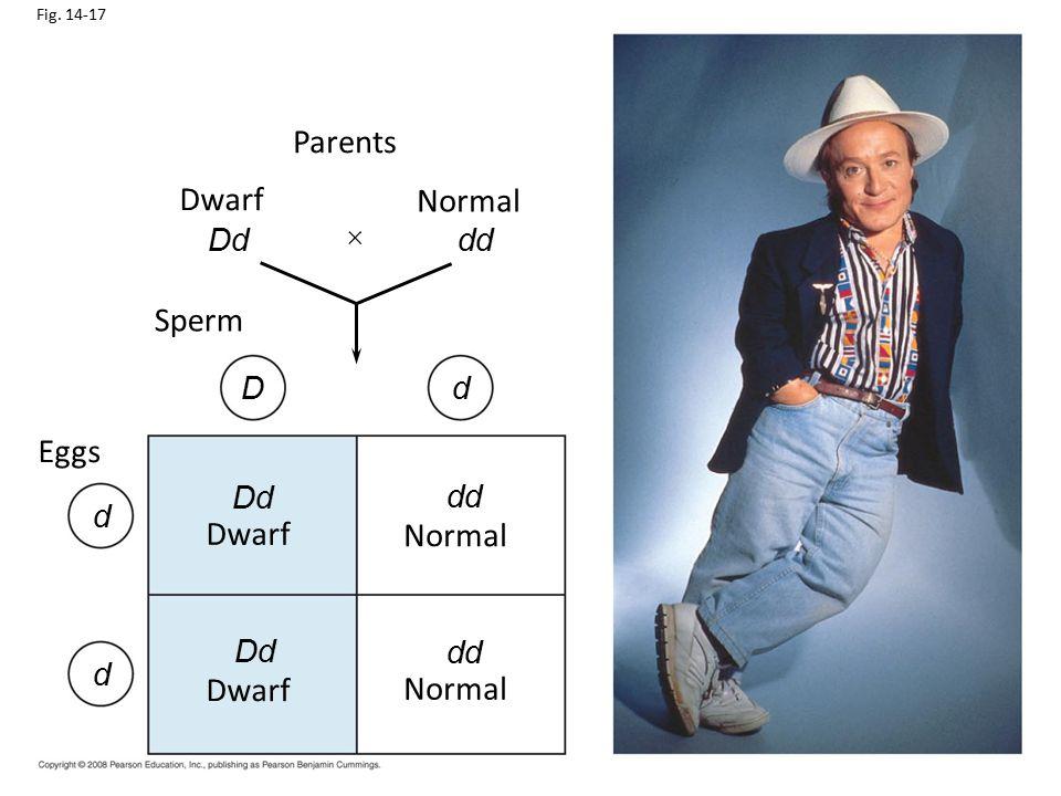 Parents Dwarf Normal Sperm Eggs Dwarf Normal Dwarf Normal Dd dd D d Dd