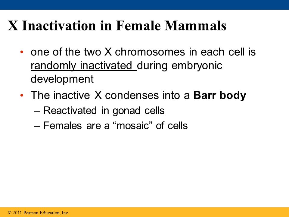 X Inactivation in Female Mammals