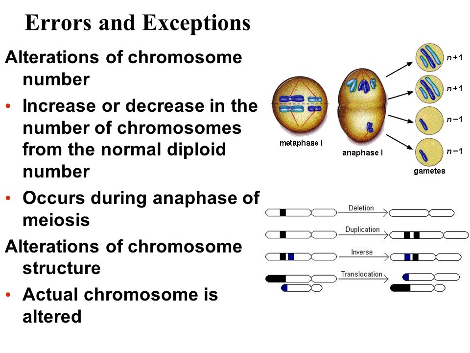 Errors and Exceptions Alterations of chromosome number