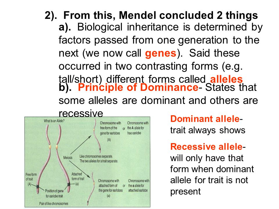 2). From this, Mendel concluded 2 things