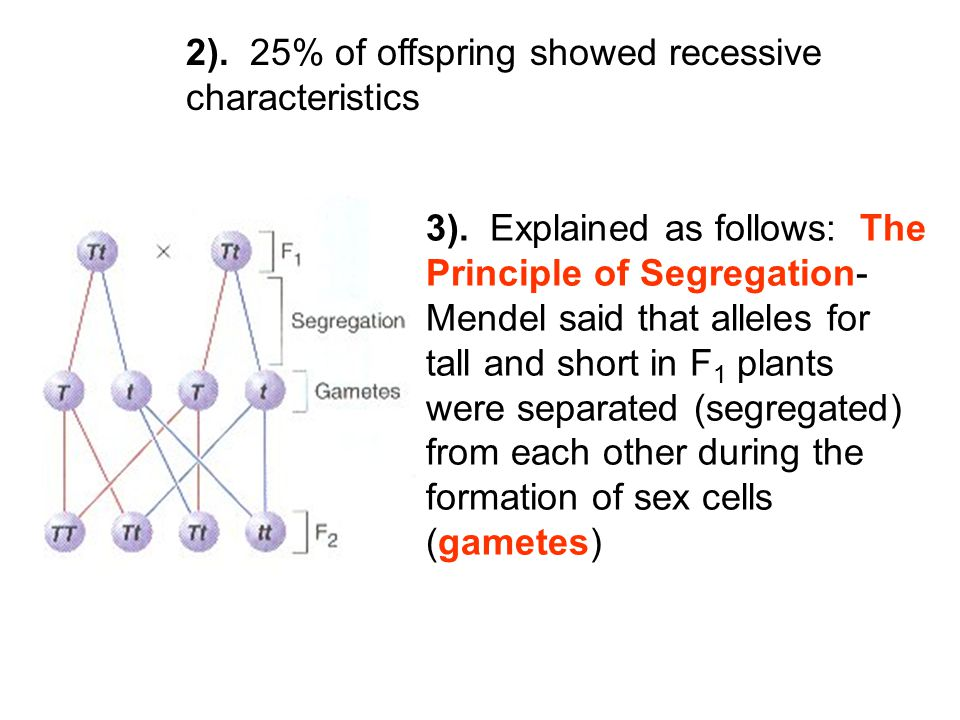 2). 25% of offspring showed recessive characteristics