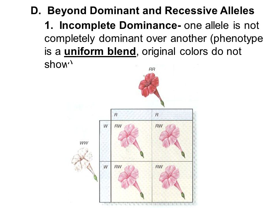 D. Beyond Dominant and Recessive Alleles
