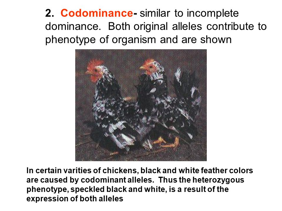 2. Codominance- similar to incomplete dominance
