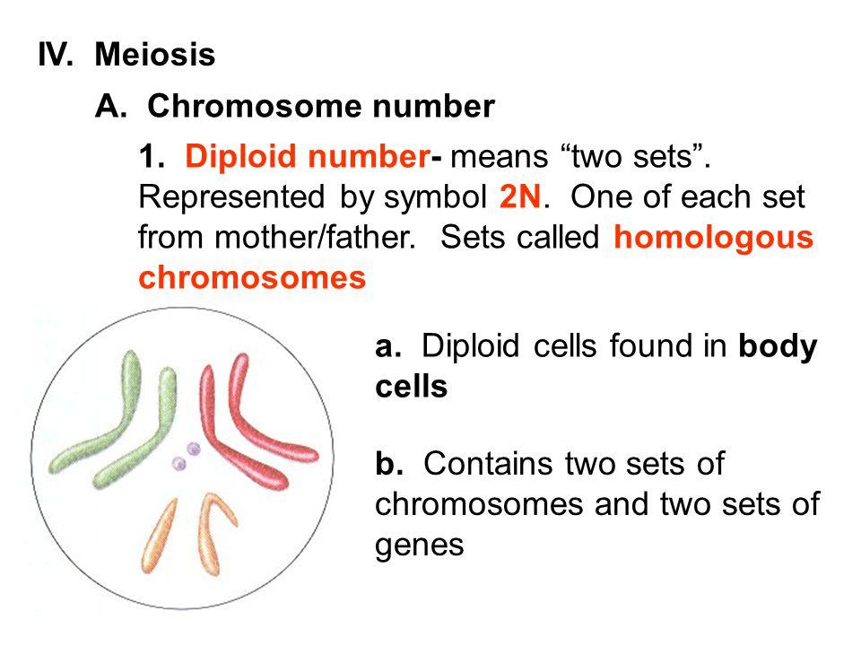 IV. Meiosis A. Chromosome number.