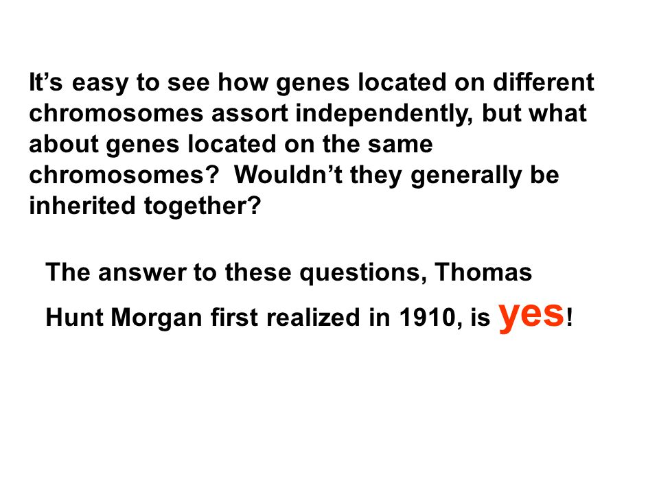 It's easy to see how genes located on different chromosomes assort independently, but what about genes located on the same chromosomes Wouldn't they generally be inherited together