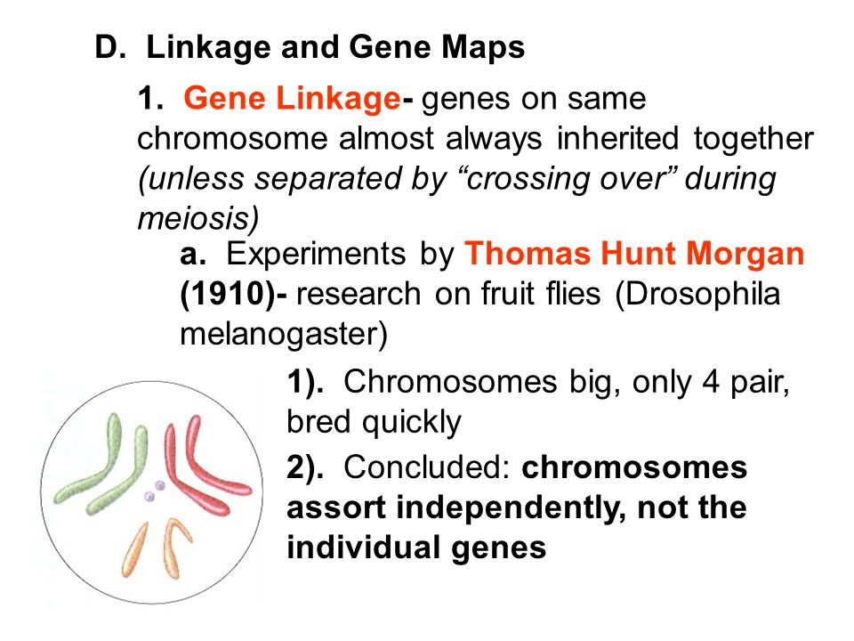 D. Linkage and Gene Maps