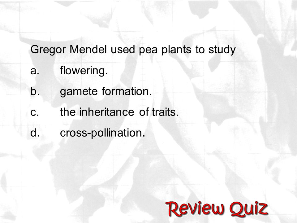Gregor Mendel used pea plants to study