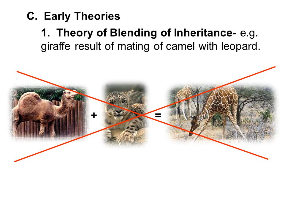C. Early Theories 1. Theory of Blending of Inheritance- e.g. giraffe result of mating of camel with leopard.