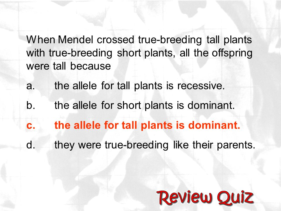 When Mendel crossed true-breeding tall plants with true-breeding short plants, all the offspring were tall because