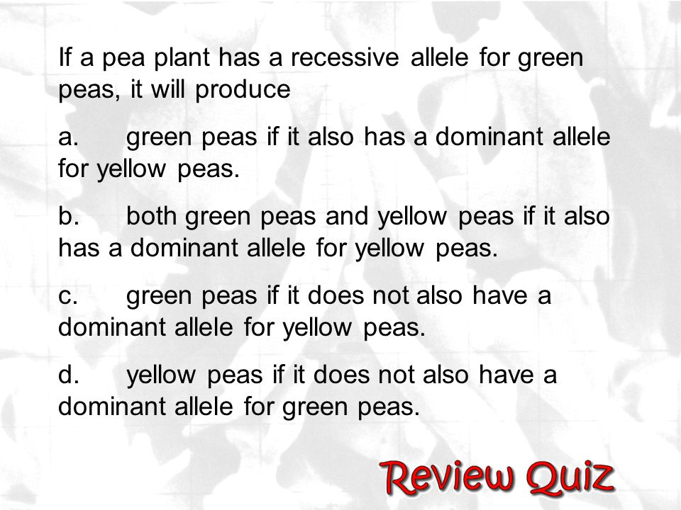 If a pea plant has a recessive allele for green peas, it will produce