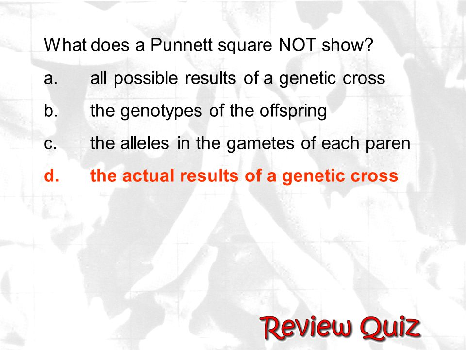 What does a Punnett square NOT show