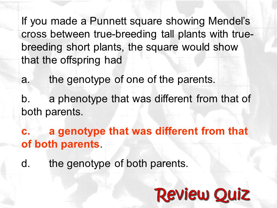 If you made a Punnett square showing Mendel's cross between true-breeding tall plants with true-breeding short plants, the square would show that the offspring had