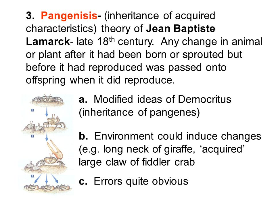 3. Pangenisis- (inheritance of acquired characteristics) theory of Jean Baptiste Lamarck- late 18th century. Any change in animal or plant after it had been born or sprouted but before it had reproduced was passed onto offspring when it did reproduce.