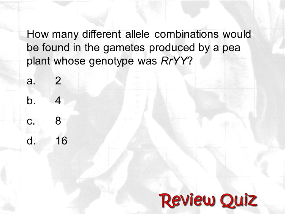 How many different allele combinations would be found in the gametes produced by a pea plant whose genotype was RrYY