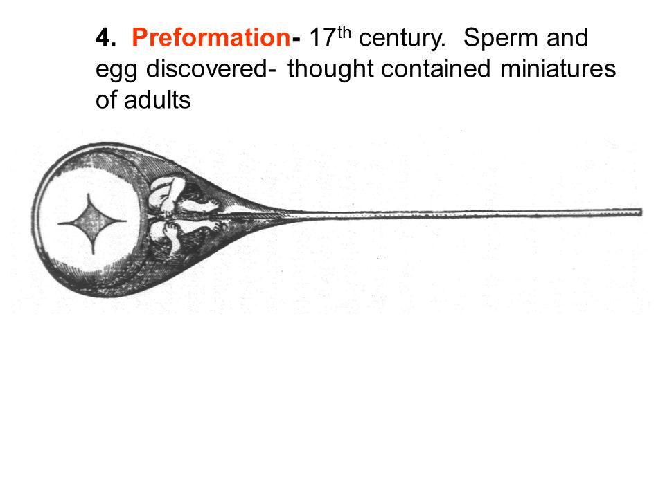 4. Preformation- 17th century. Sperm and