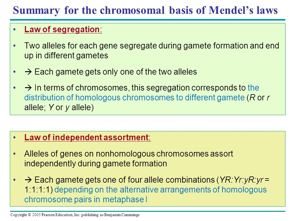 Summary for the chromosomal basis of Mendel's laws