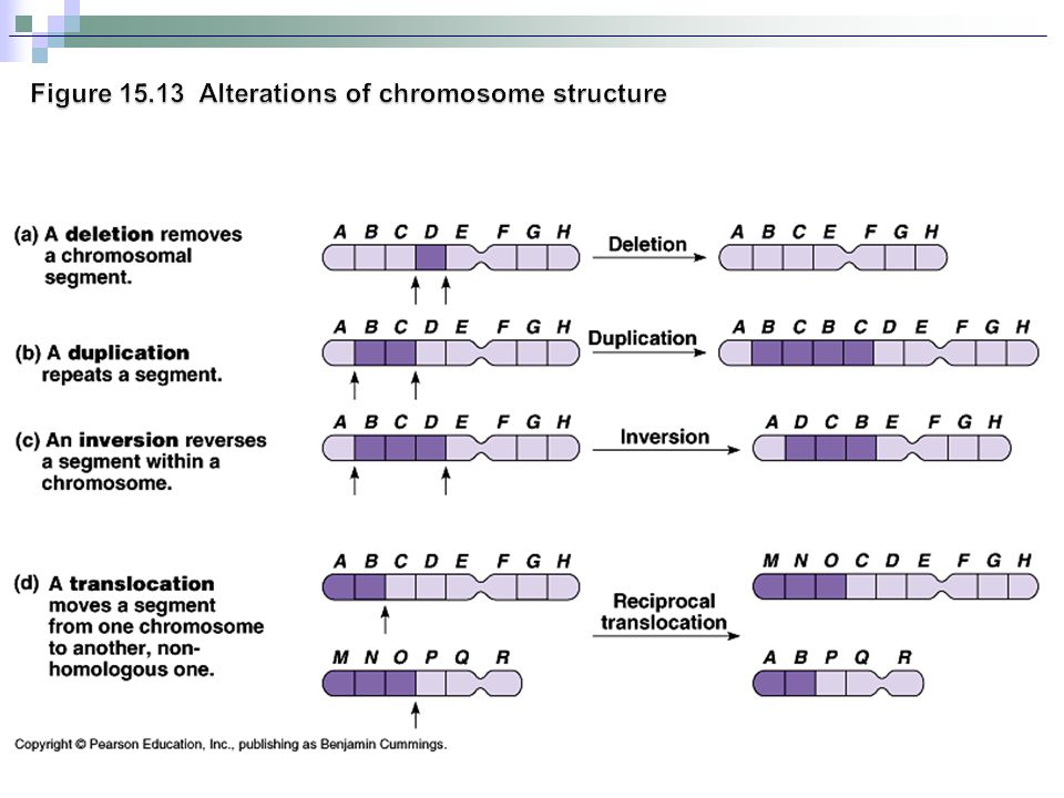 Figure 15.13 Alterations of chromosome structure