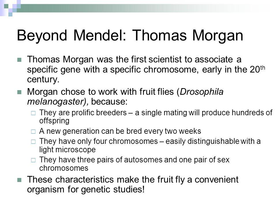 Beyond Mendel: Thomas Morgan