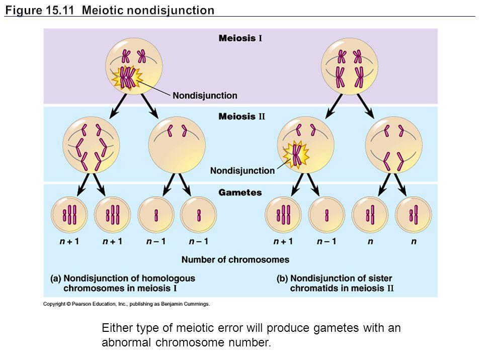 Figure 15.11 Meiotic nondisjunction