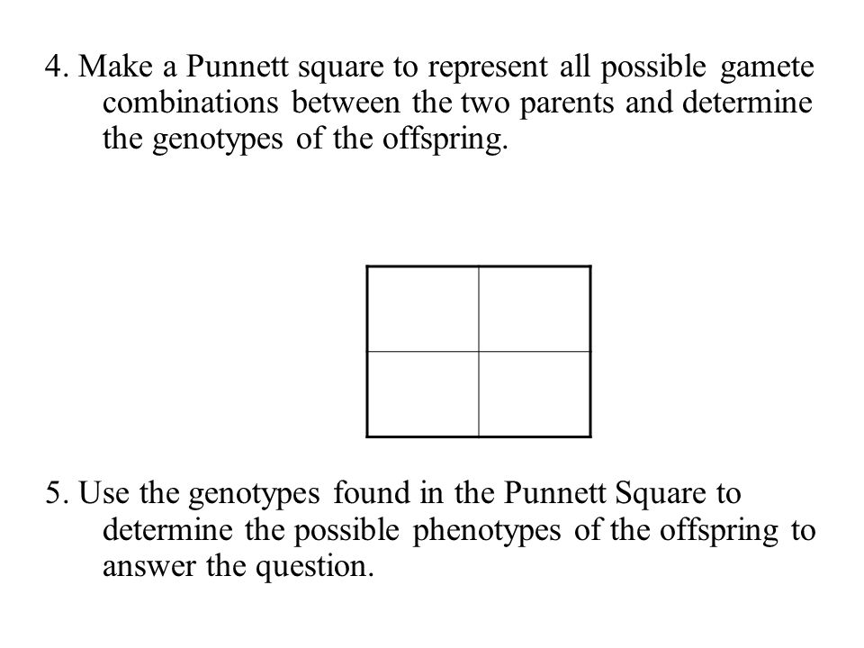 BIOL 160 4. Make a Punnett square to represent all possible gamete combinations between the two parents and determine the genotypes of the offspring.