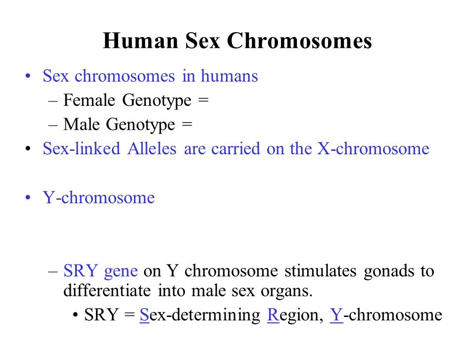 Human Sex Chromosomes Sex chromosomes in humans Female Genotype =
