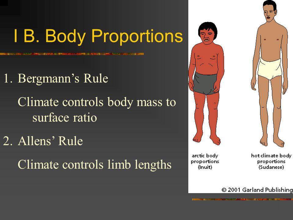 I B. Body Proportions Bergmann's Rule