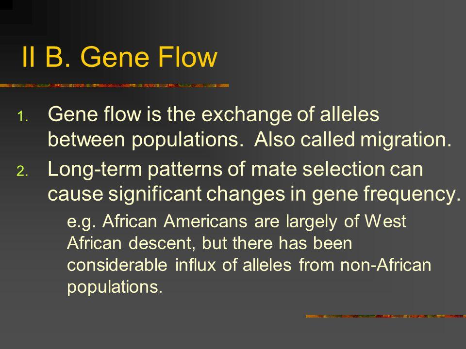 II B. Gene Flow Gene flow is the exchange of alleles between populations. Also called migration.