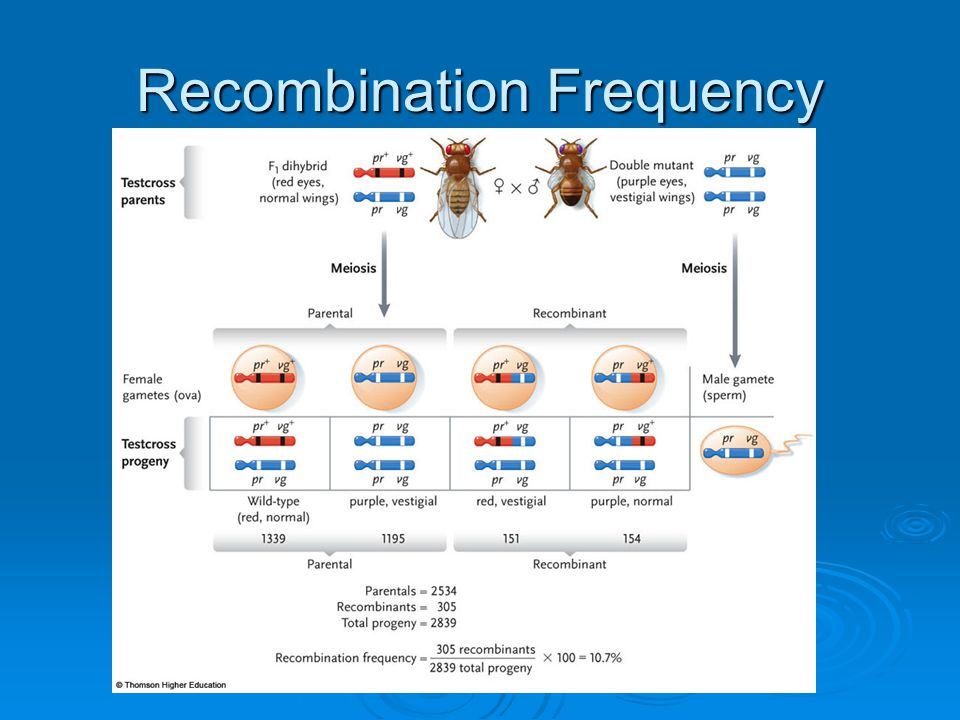 Recombination Frequency