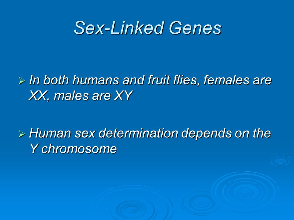 Sex-Linked Genes In both humans and fruit flies, females are XX, males are XY.