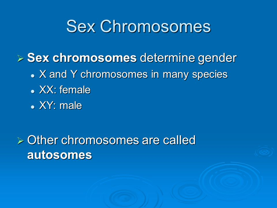 Sex Chromosomes Sex chromosomes determine gender