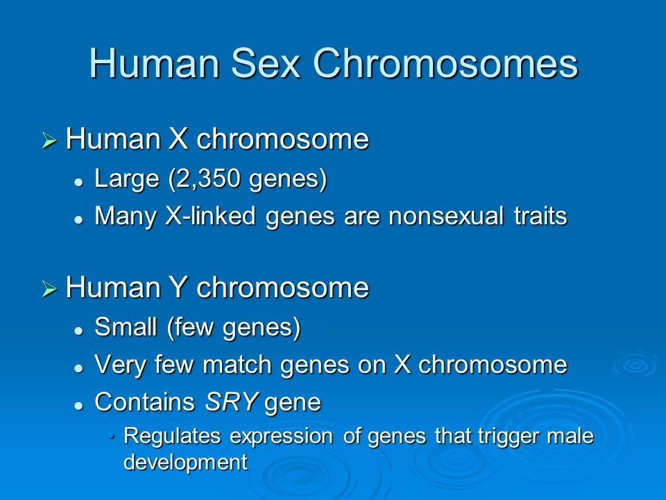 Human Sex Chromosomes Human X chromosome Human Y chromosome