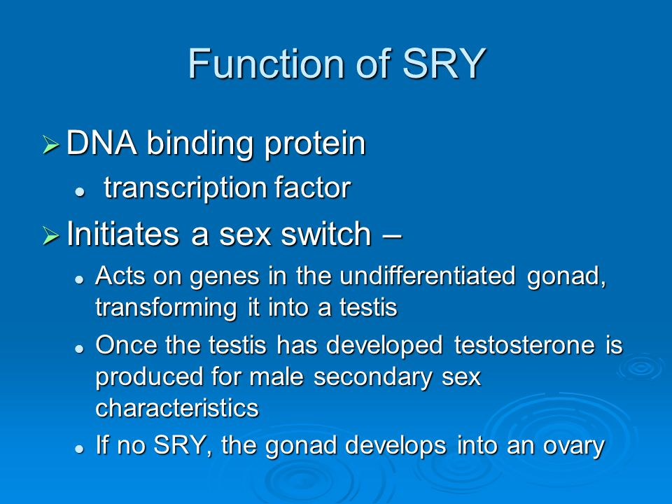 Function of SRY DNA binding protein Initiates a sex switch –