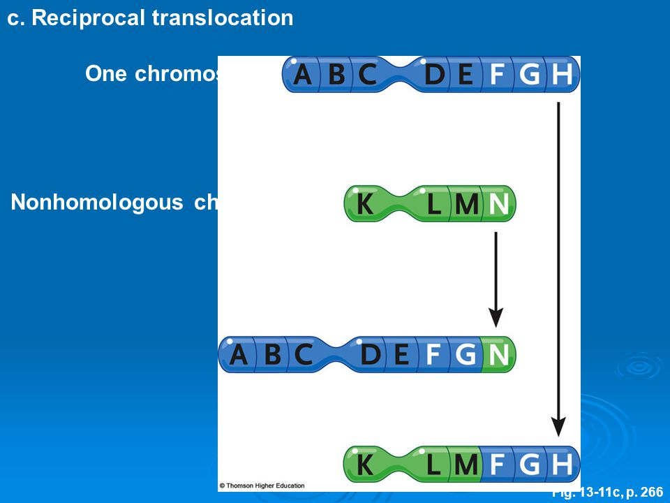 c. Reciprocal translocation