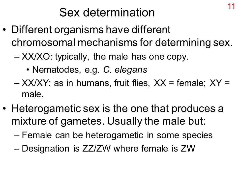 Sex determination Different organisms have different chromosomal mechanisms for determining sex. XX/XO: typically, the male has one copy.