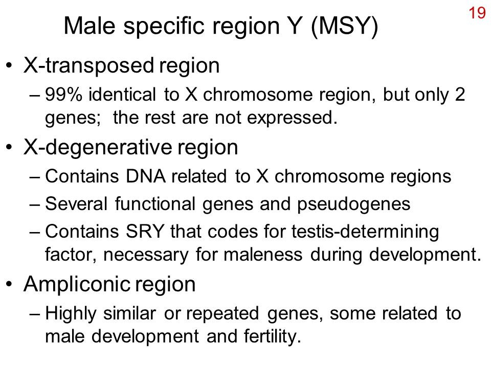 Male specific region Y (MSY)