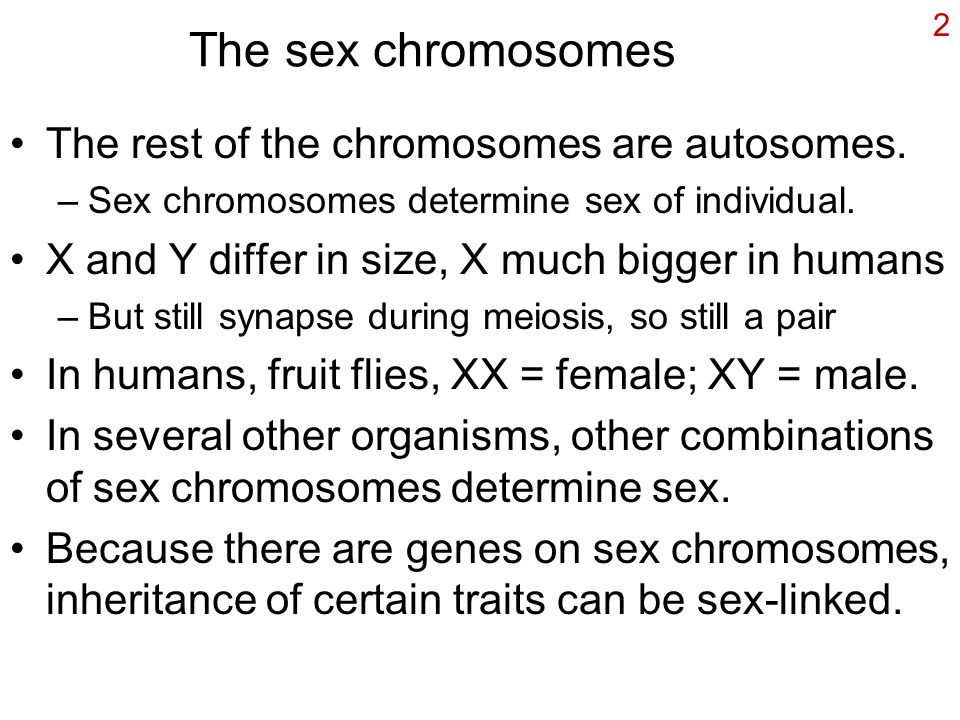 The sex chromosomes The rest of the chromosomes are autosomes.