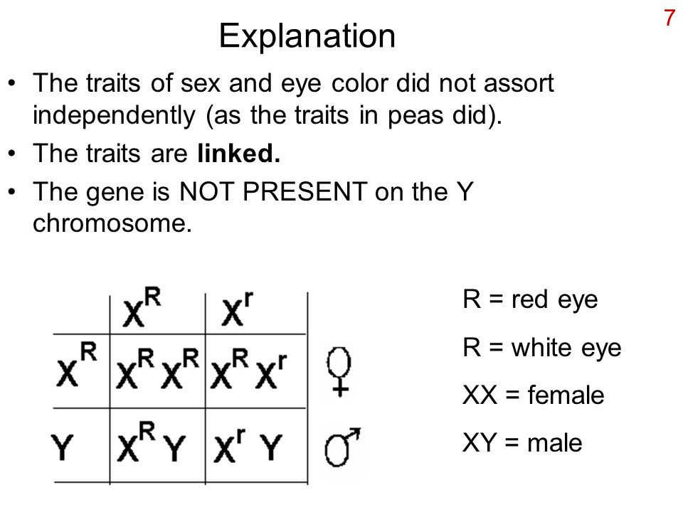 Explanation The traits of sex and eye color did not assort independently (as the traits in peas did).