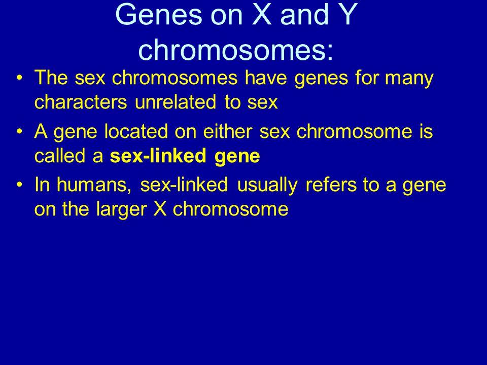 Genes on X and Y chromosomes: