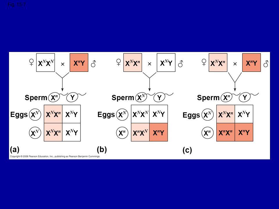 (a) (b) (c) Sperm Sperm Sperm Eggs Eggs Eggs XNXN  XnY XNXn  XNY